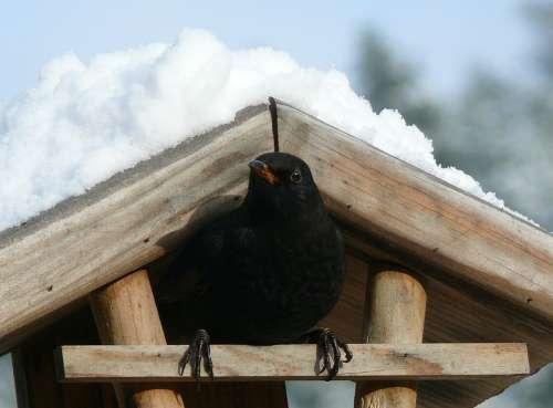 Blackbird Snow Bird Feeder