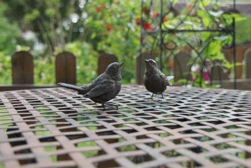 Blackbirds Garden Birds Table Decorations Ornament