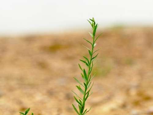 Blade Of Grass Green Nature Macro Bokeh Atmosphere