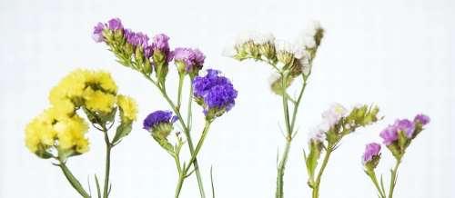 Bloom Botany Color Decor Decoration Floral Flower