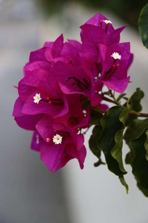 Blossom Bloom South Mallorca Pink Garden