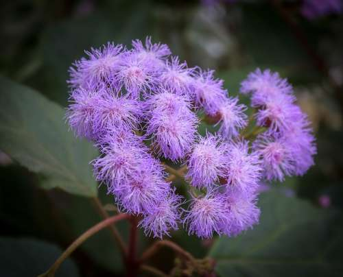 Blossom Bloom Flower Purple Plant Flora Large
