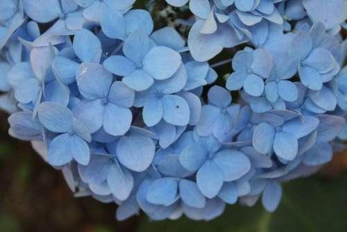 Blue Petal Flowers Garden