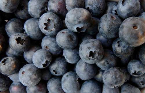 Blueberry Blueberries Food Fruit Berries Fruits