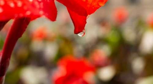 Blueme Drip Building Macro Rain