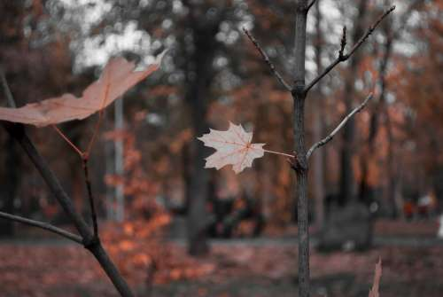Bokeh Leaves Sheet Foliage Nature Sprig
