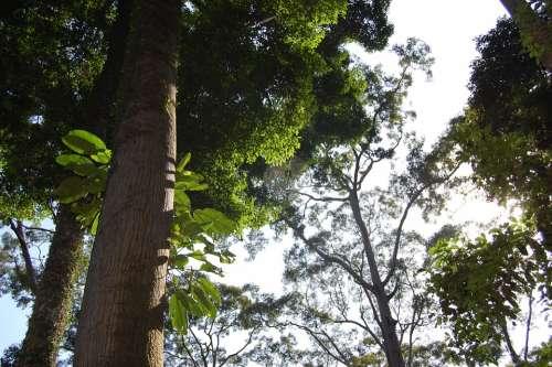Borneo Jungle Rain Forest Malaysia Ape Orangutans