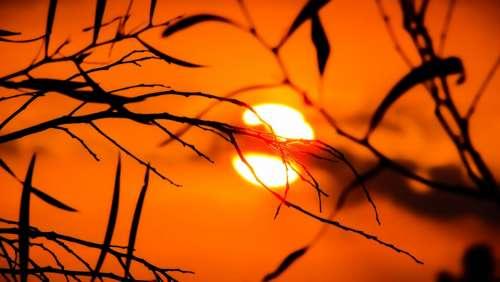 Branch Sunset Nature Sunlight Evening Silhouettes