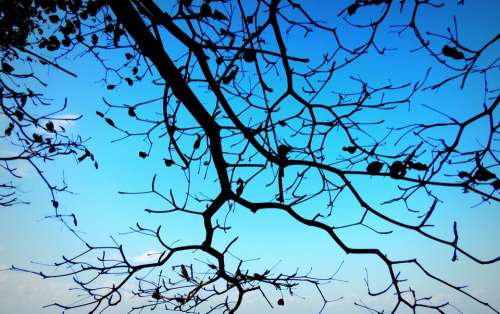 Branch Blue Sky Tree Nature Silhouette Wood