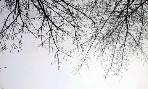 Branch Sky Winter Tree
