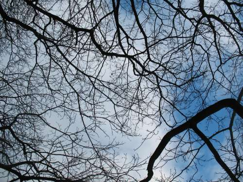 Branches Silhouette Sky Blue Black Nature Trees