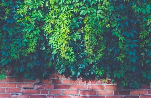 Brick Wall Bricks Bright Leaves Light Outdoors
