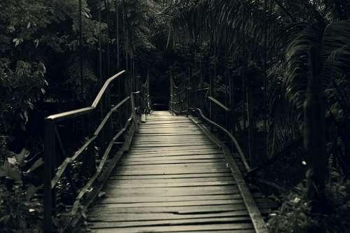 Bridge River The Tree Twilight Architecture