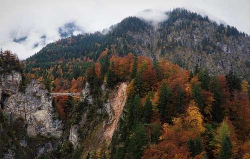 Bridge Fog Mountain Forest Fall Nature Misty