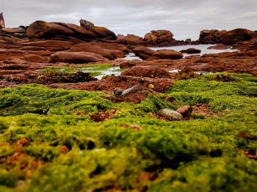 Brittany Coast France Atlantic Rock Nature Moss