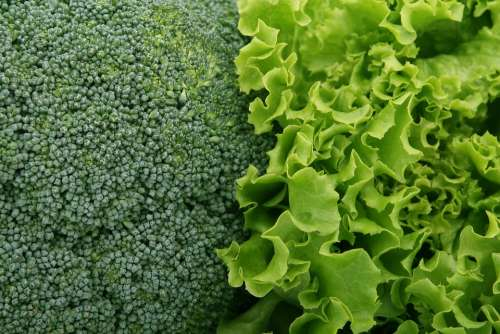 Broccoli Salad Green Culinary Food Fresh