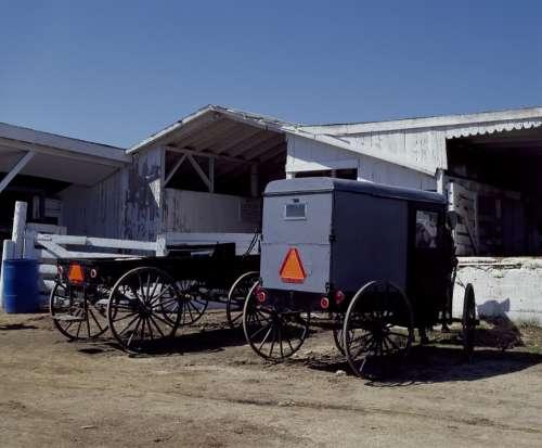 Buggies Horse Farm Rural Carriage Transportation