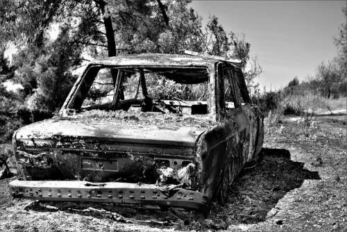 Burned-Out Car Forest