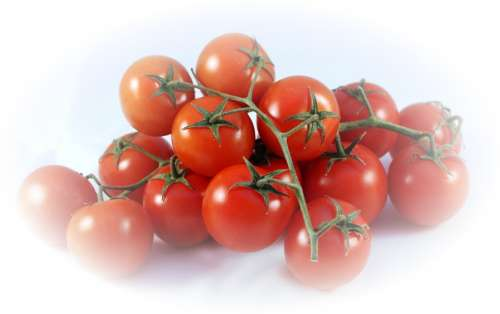 Bush Tomatoes Tomatoes Red Food Healthy Cook Eat