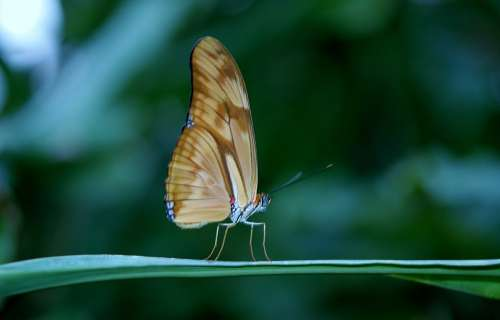 Butterfly Insect Wing Wildlife Bug Bright Small