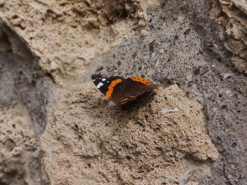 Butterfly Pompeii Stone