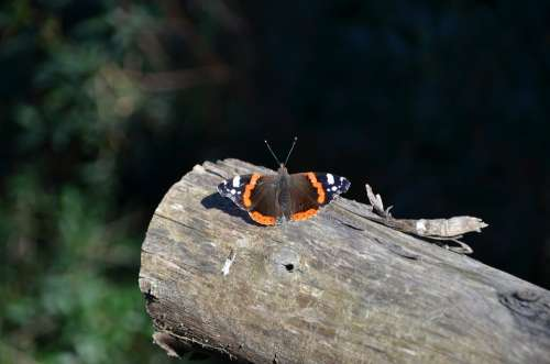 Butterfly Log Orange Nature Wood Insect Antennas