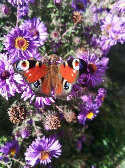 Butterfly Flower Nature Spring Butterflies