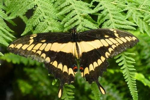 Butterfly Butterfly Garden Fauna Wings Color Wing
