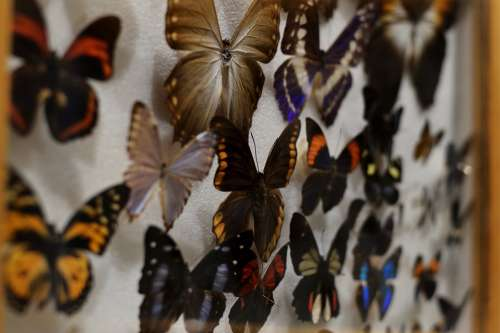 Butterfly Insect Collection Nature Wild Life Set
