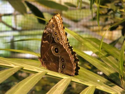 Butterfly Animals Beauty Insect Butterflies