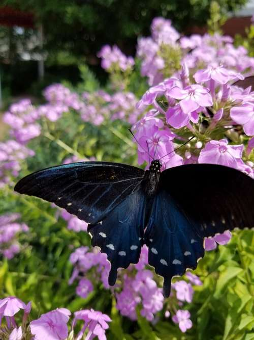 Butterfly Flowers Nature Bloom Blossom Spring