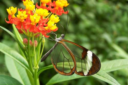 Butterfly Nature Flower Bug
