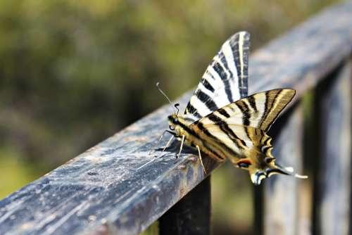 Butterfly Posing Butterfly Wings Freedom