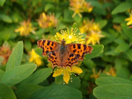 Butterfly Flower Nature Plant Floral Flora Green