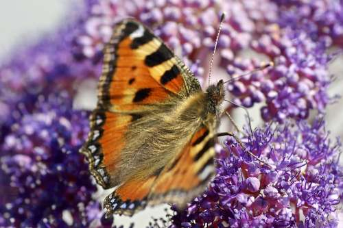 Butterfly Nature Flower Color Forage Insect