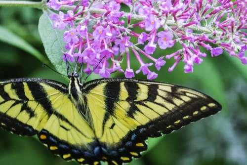 Butterfly Flowers Purple Summer Probosis Nectar