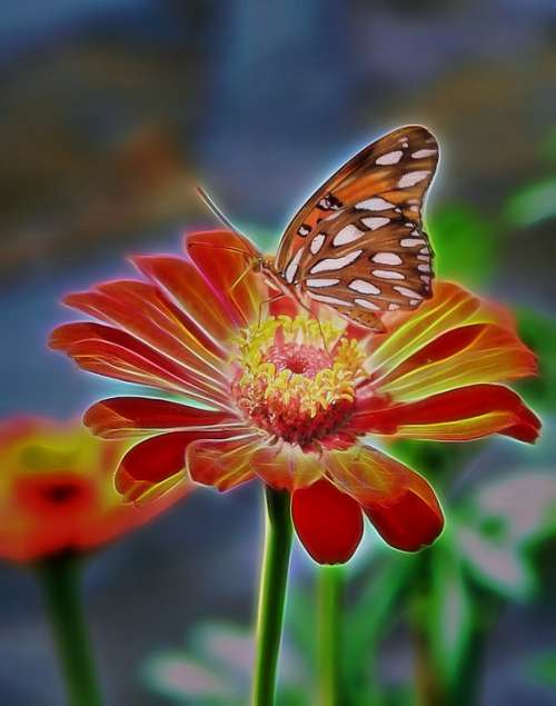Butterfly Zinnia Colorful Nature Insect Fauna
