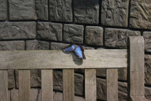 Butterfly Lake Dusia Wall Bench