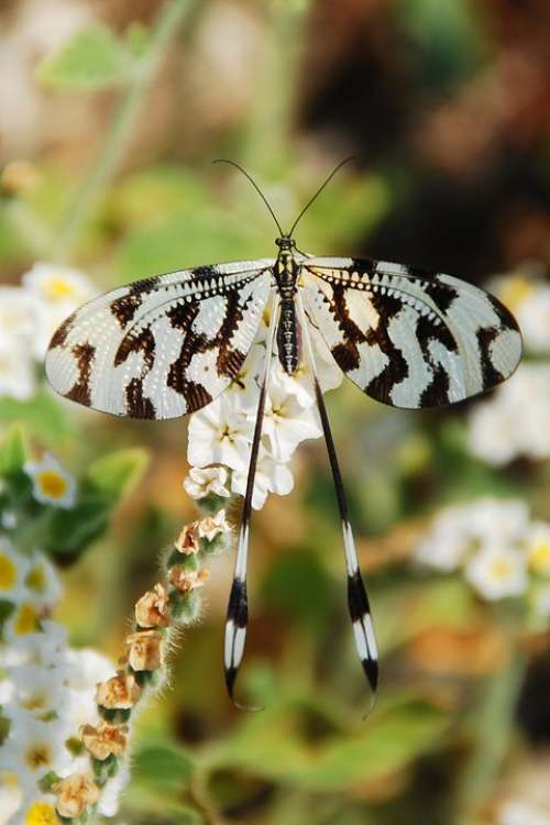 Butterfly Insect Black White Pattern Summer