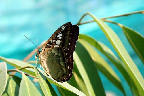 Butterfly Nature Insect Closeup Tropical Insects
