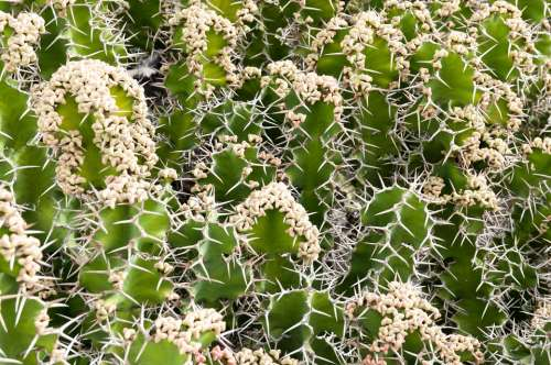 Cactus Plant Pattern Nature Green Flower Natural