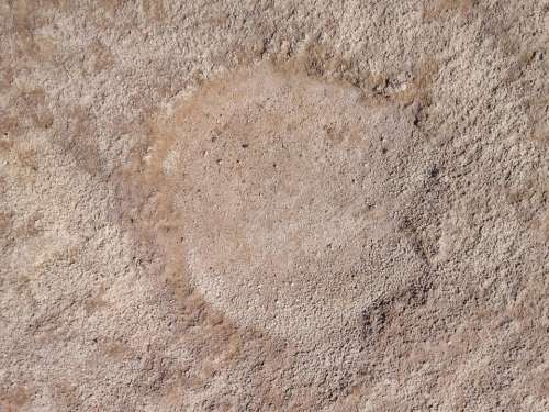 Camel Footprint Sand Animal Footprints Backgrounds