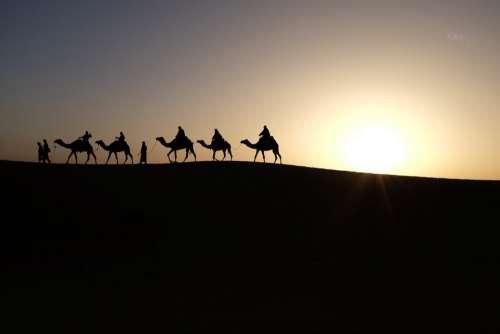 Camels Sunrise Travel Desert Sand Sun Dry