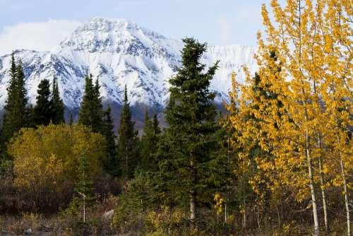Canada Fall Nature Landscape Trees Colors Foliage