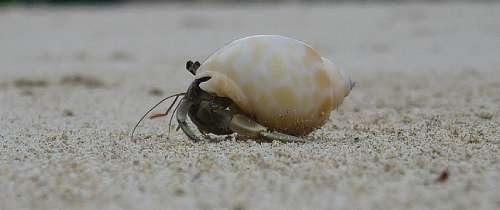 Cancer Animals Creature Crab Pet Armor
