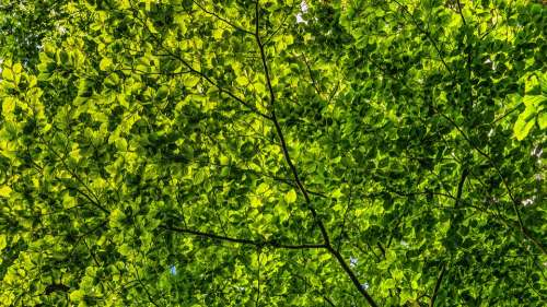 Canopy Green Leaves Branches Color Foliage