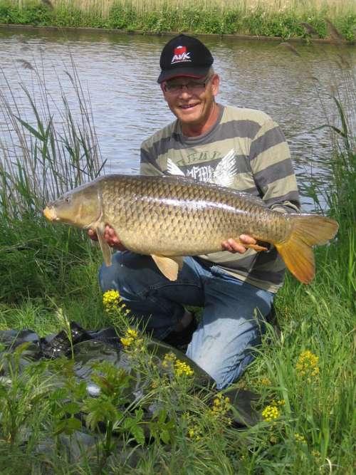 Carp Zuid Willemsvaart Summer Fish Fishing