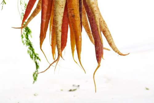 Carrots Hanging Vegetable Food Dangling Healthy