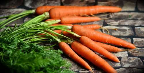Carrots Vegetables Harvest Healthy Red Carrots
