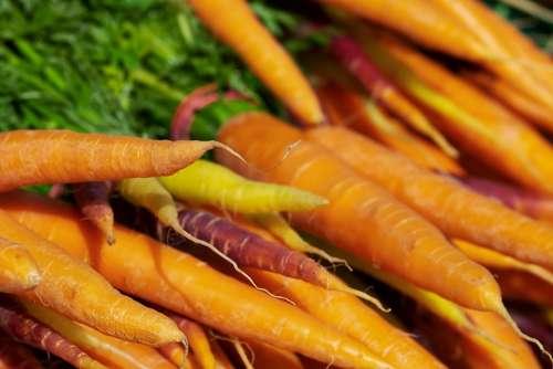 Carrots Vitamins Nutrition Vegetables Food Plant